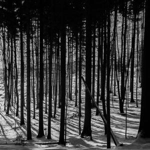 Peter Hladký - Les, sneh, tiene