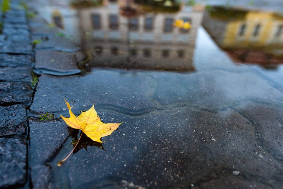Lucka Blašková - Jesenné kontrasty