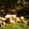 Ruženka Fifíková - Farby jesene